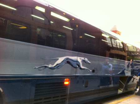 greyhound Bus